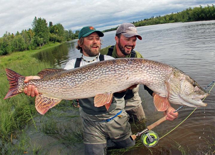 рыбалка в апреле на щуку на кружки